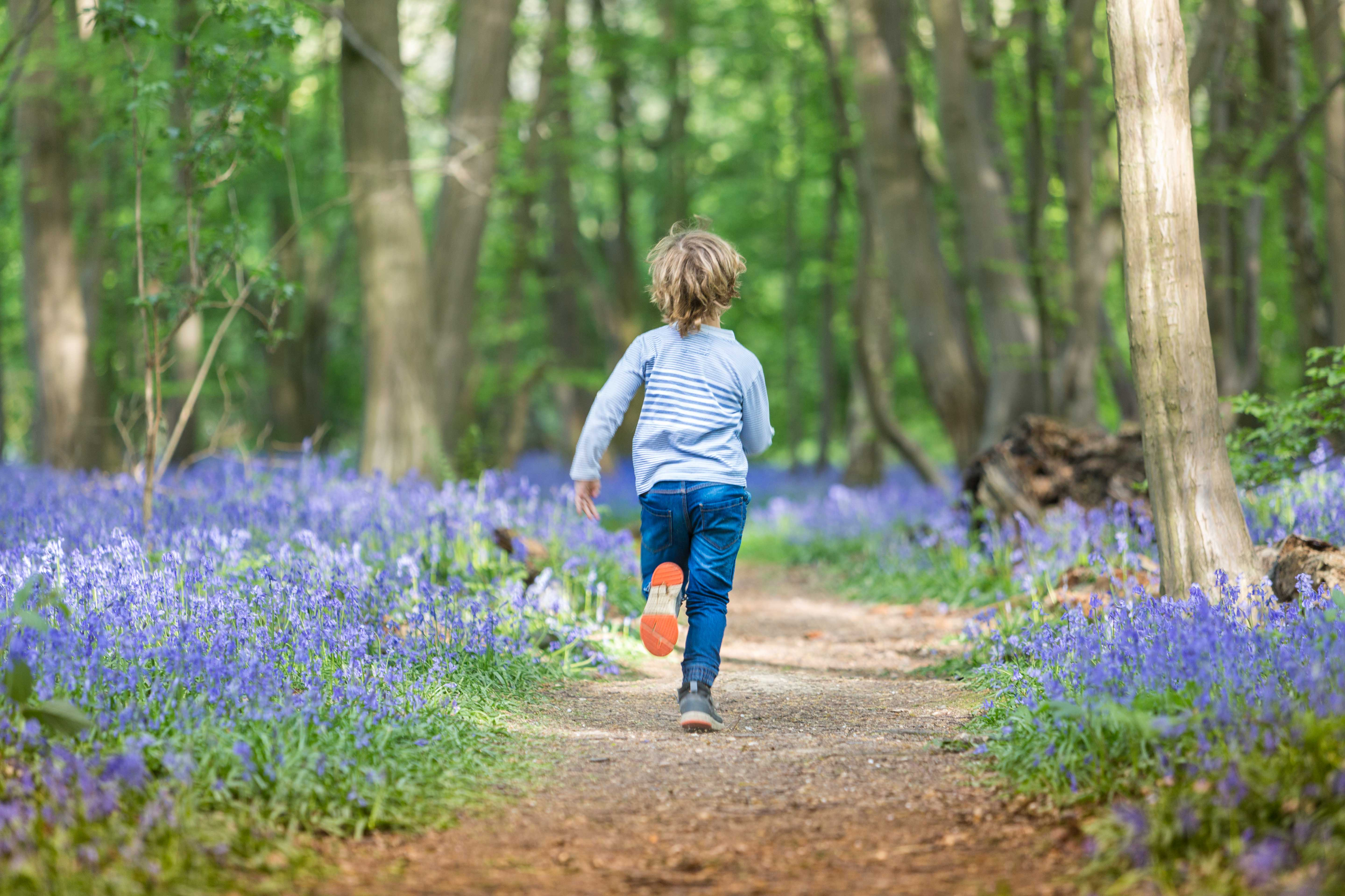 family outdoors St Albans bluebells photographer photoshoot