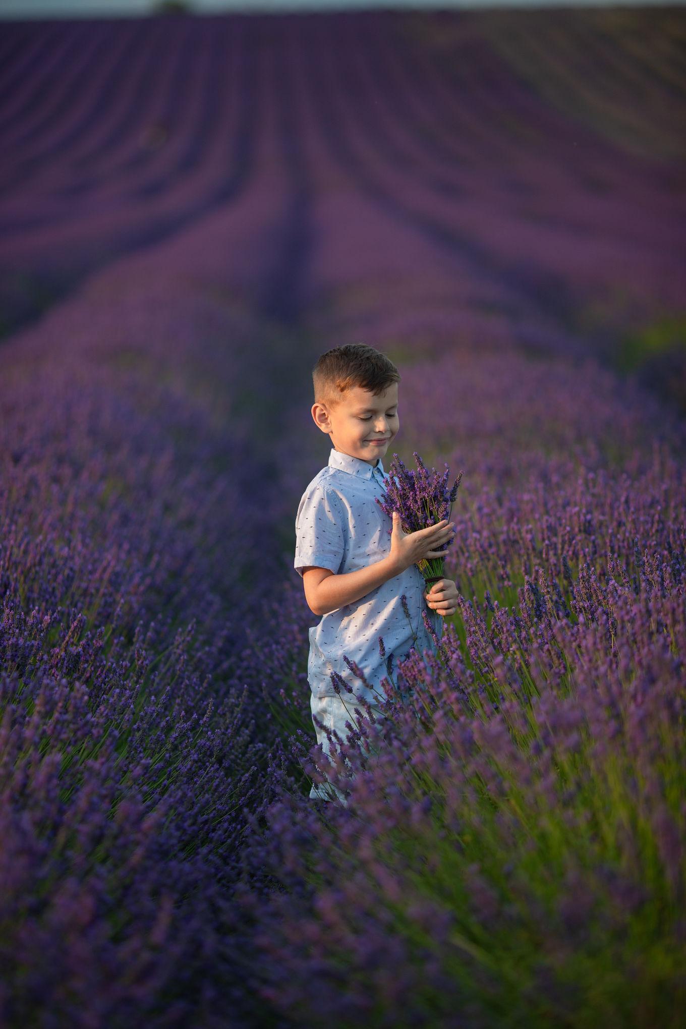 Hitchin Lavender Photographer
